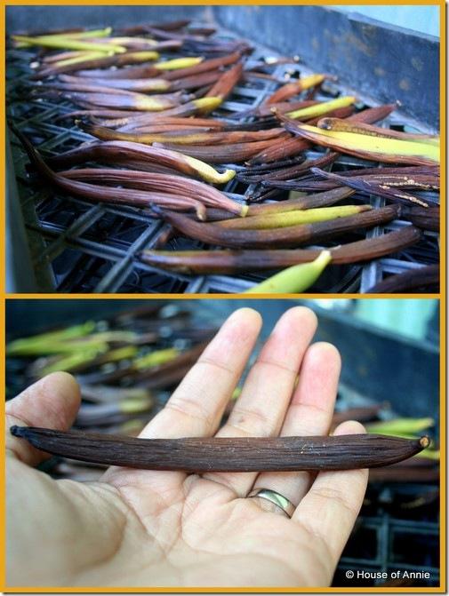Hawaiian Brian's Vanilla Beans