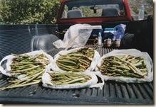 Free asparagus