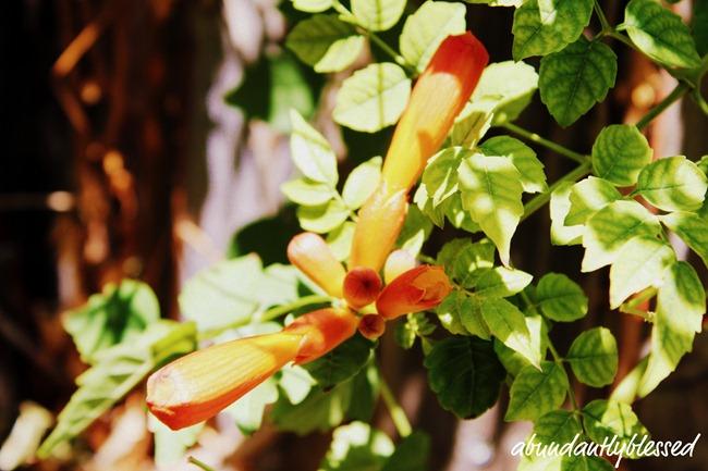 Flower6-11d