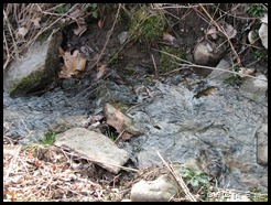 Gurgling Stream