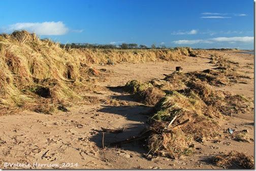 30-damaged-dunes