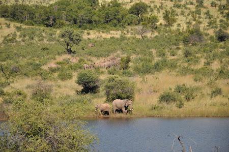 10. safari Africa de Sud.JPG