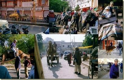 Jaipur Day