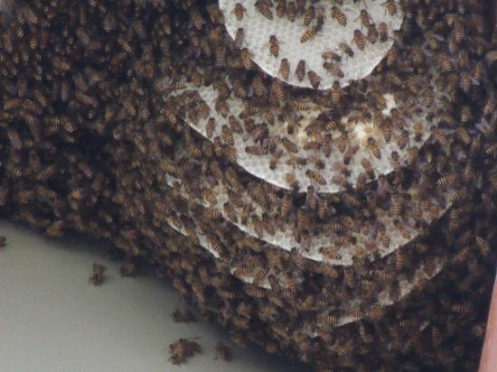 A beautiful bees nest
