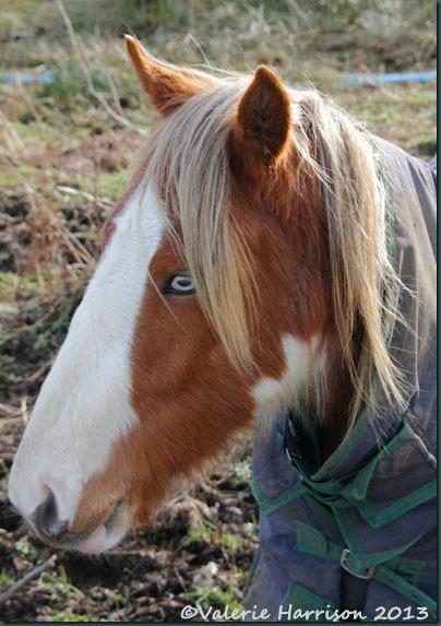 28-horse