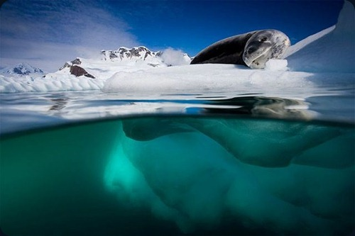Polar Obsession22