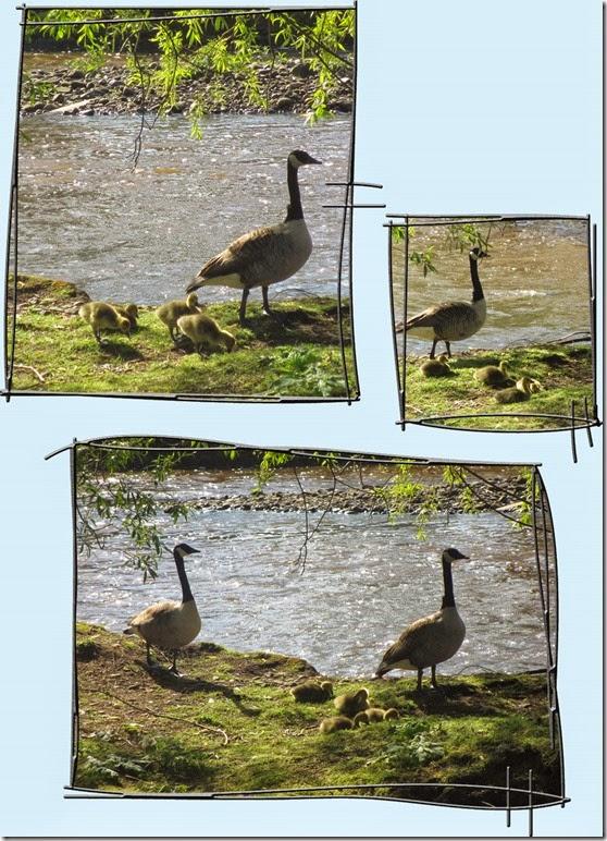 goslings-2