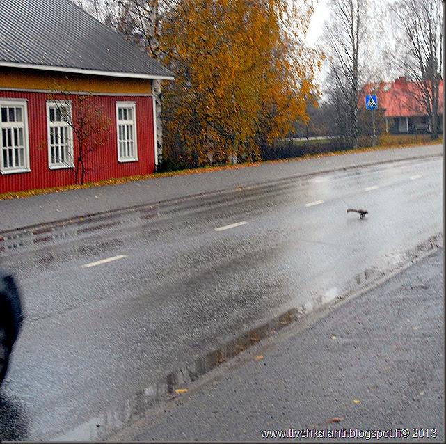 lauantain sää kuvia orava 013
