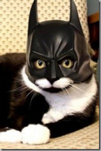 Catman2