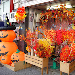 halloween is coming in Nagoya, Aiti (Aichi) , Japan