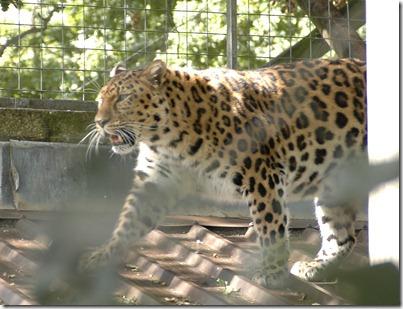 marwell zoo 020