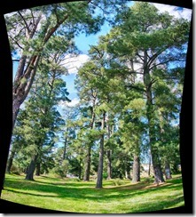 autostitched pano