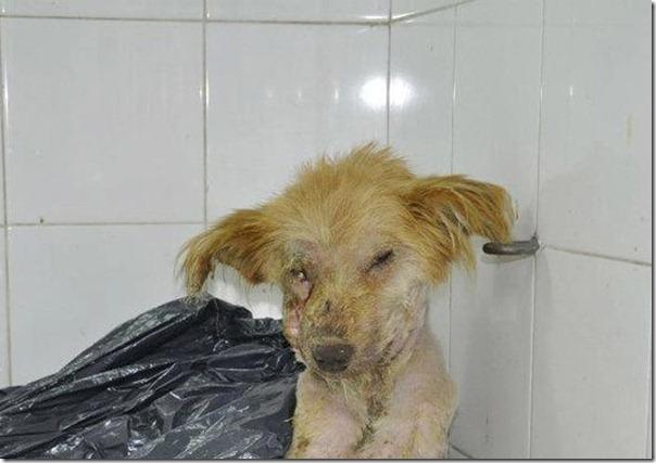 História incrível do salvamento de um cão (9)