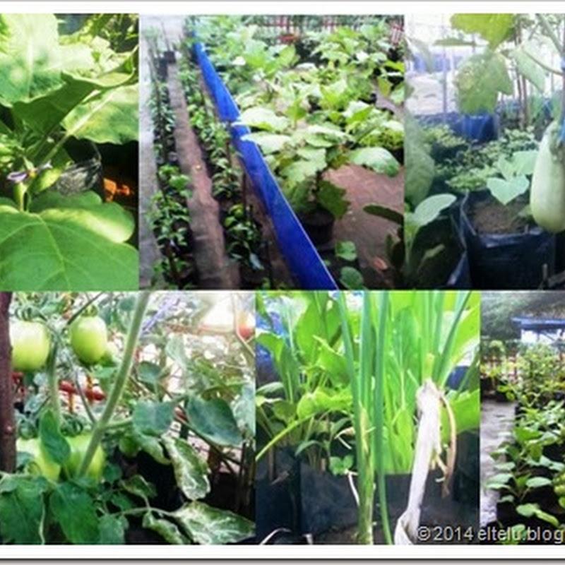 Sarana Produksi Dan Teknik Yang Tepat Dalam Pembudidayaan Tanaman Sayuran