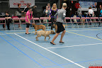 20130510-Bullmastiff-Worldcup-0158.jpg