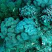 koral_26.jpg
