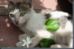 cat_and_flower_by_echiryryota-d3hx5dg