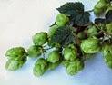 BrewingBeer-Hops