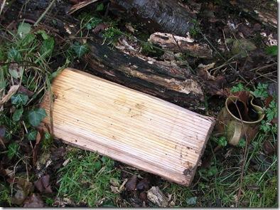 20130110 Metre chestnut refuge (2)
