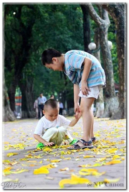 Hà Nội mùa lá vàng trải thảm, Việt Nam