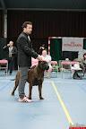 20130511-BMCN-Bullmastiff-Championship-Clubmatch-2306.jpg