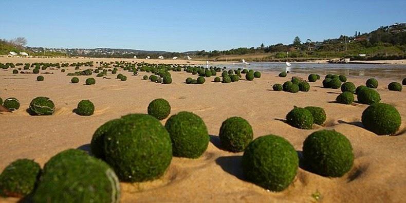 marimo-moss-balls-2