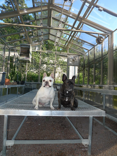 Well, here we are now in the empty Skylands greenhouse!  Don't you think the crew did a really nice job washing the windows?