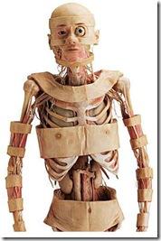 corpo-humano00