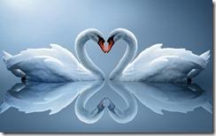 Swan-Love-Heart