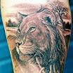 Lion #3