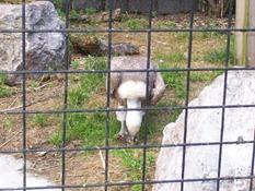 2013.08.04-030 vautour