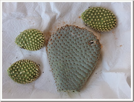 110227_opuntia_pads