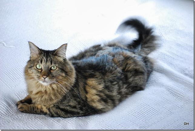 10-14-13 Osceola Cats (6)