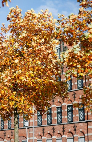 Fall-Oct12-9967