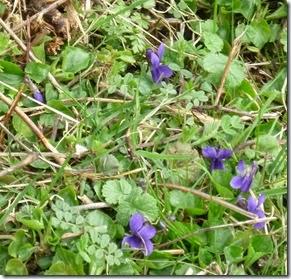 1 violets bridge 101