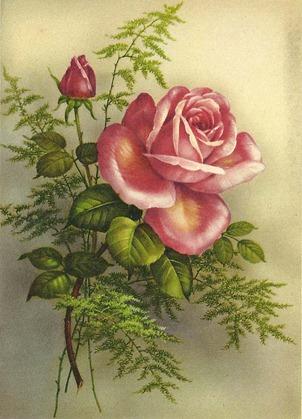 lovelyrose2