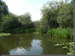 Erewash canal 08.13 007