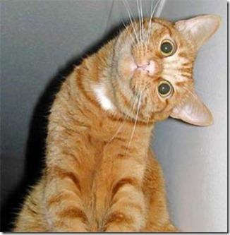 gatto-curioso