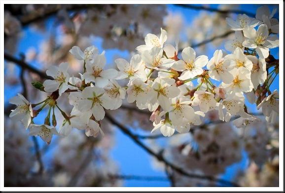 Spring 0413-0010