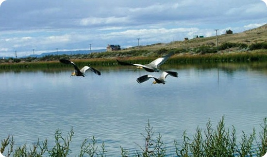 laguna nimez aves