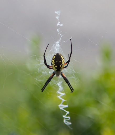 Spider Photo Gallery  Ojibway Nature Centre  Windsor