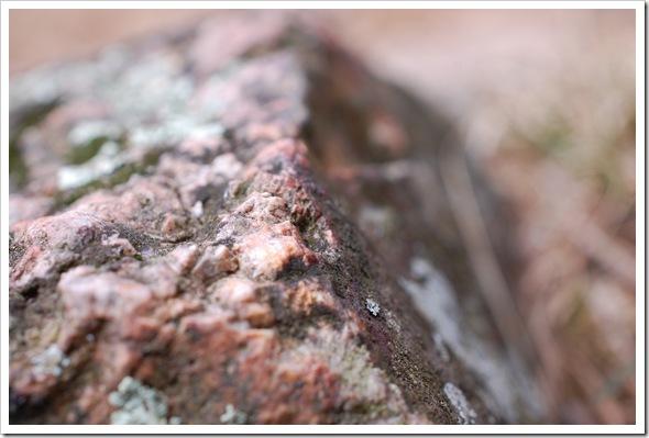 Lichenscapes (1)