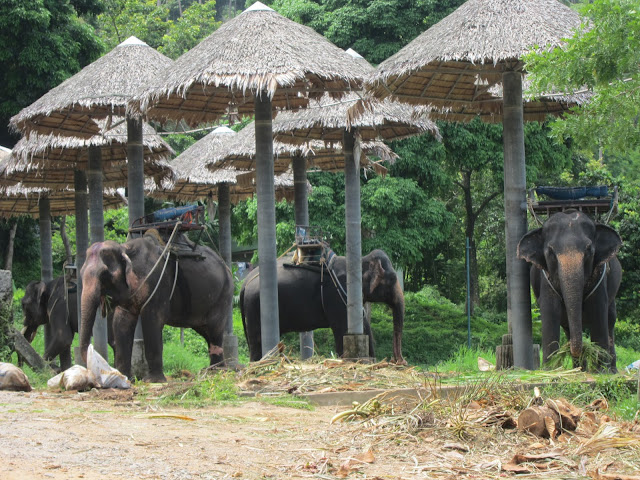 A typical elephant camp on Koh Samui.