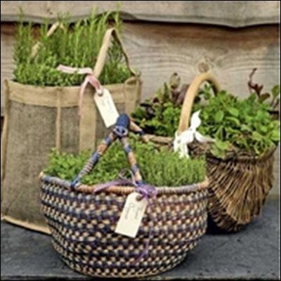 Herbs in baskets