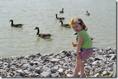 Feeding the Ducks 040