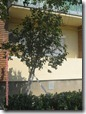 Bl 1 Aradul curat 2011 184