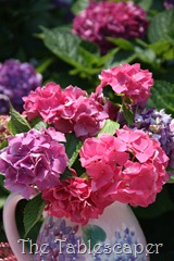 In the Hydrangea Garden 062