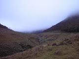 A misty Surya Kencana near Gunung Gede (Daniel Quinn, December 2011)