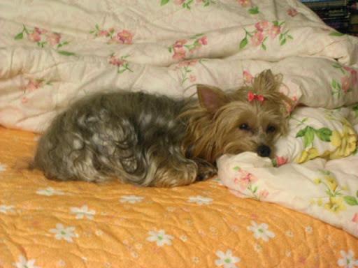 Tasha asleep on a pillow