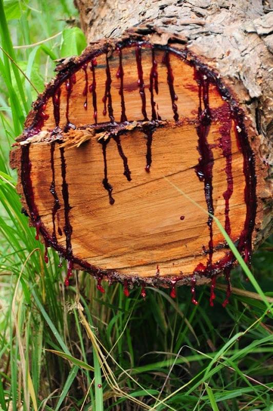 bloodwood-tree-1